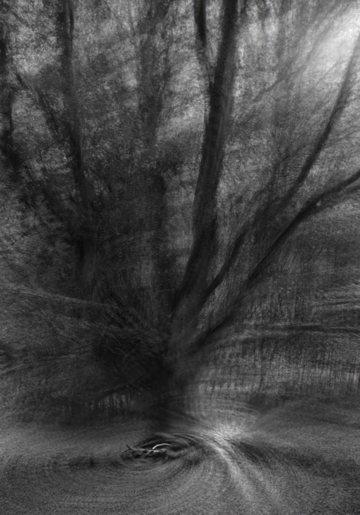Étude arbre 2