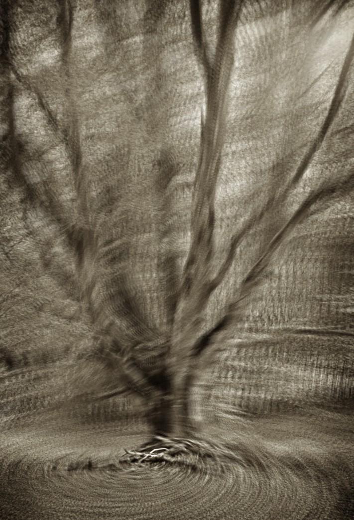 Étude arbre 4