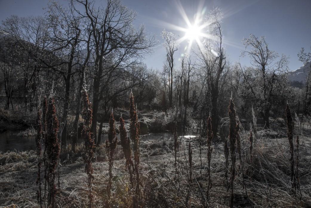 Frostsumpf