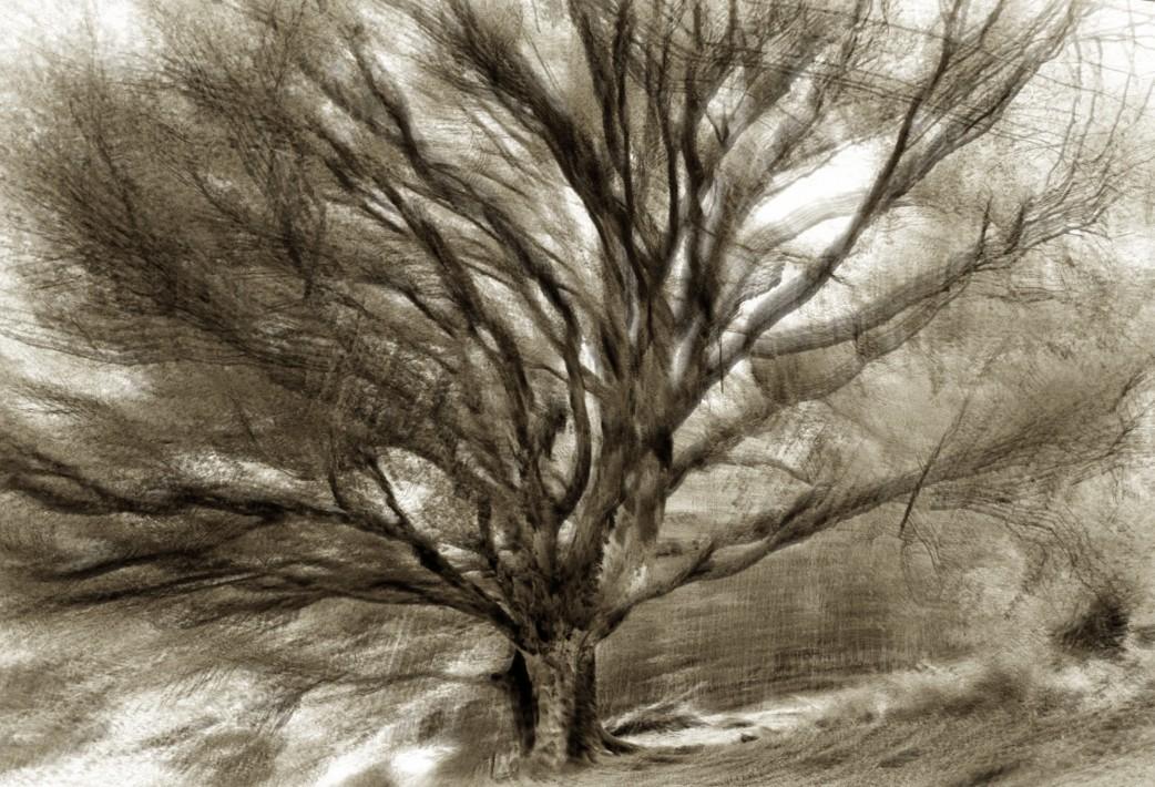 Étude arbre 6