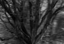 Étude arbre 1