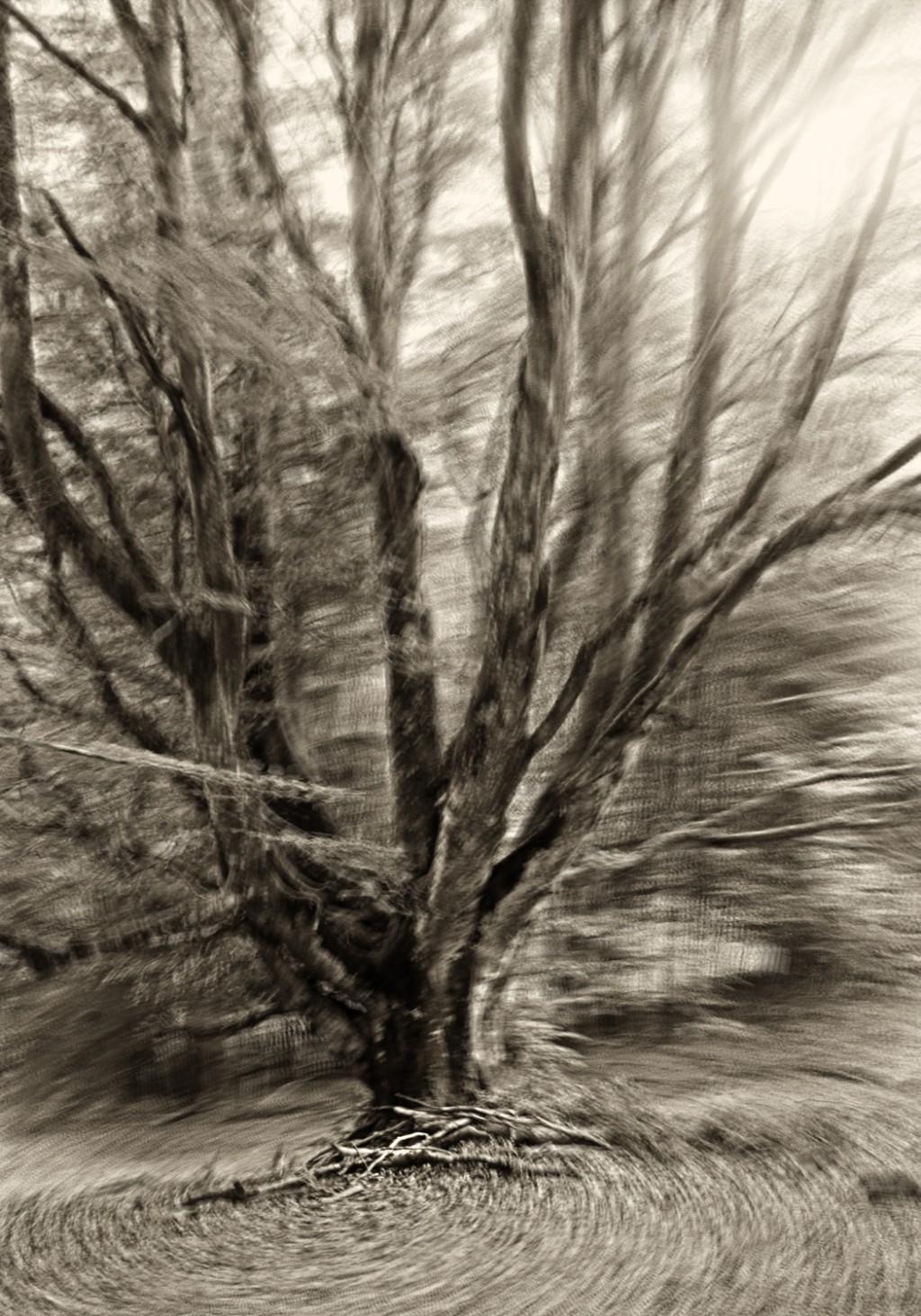 Étude arbre 3