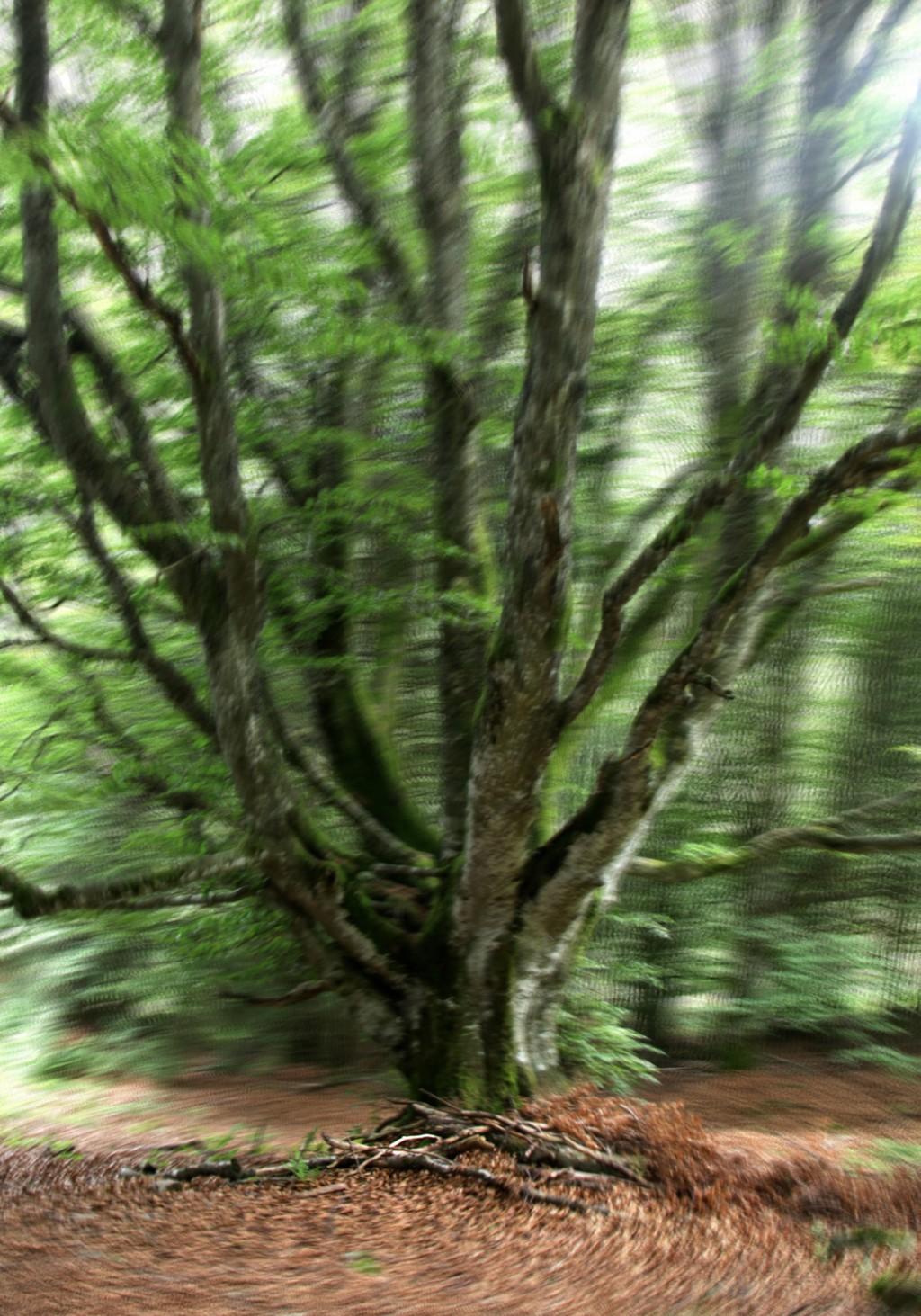 Études arbres et plantes