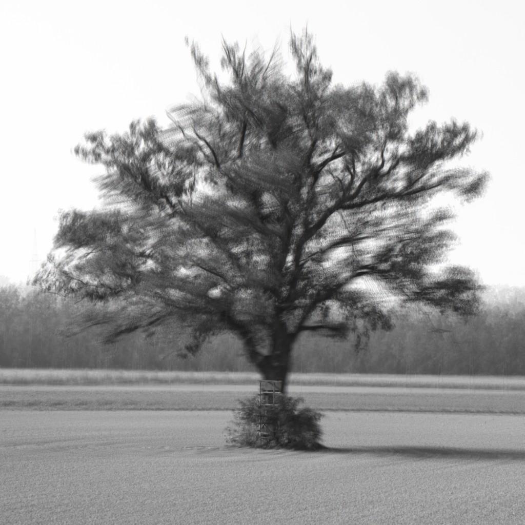 Étude arbre 8